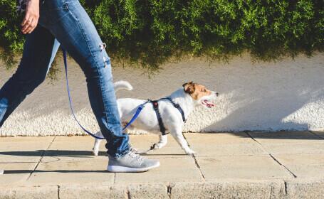 câine plimbare