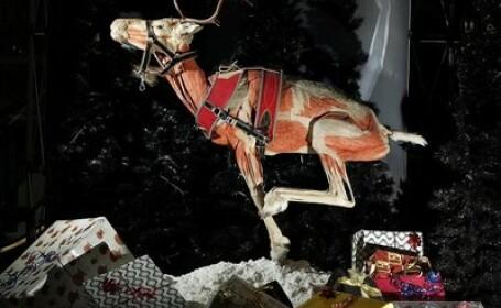 Cadavre de animale conservate expuse la o gradina zoologica din Germania