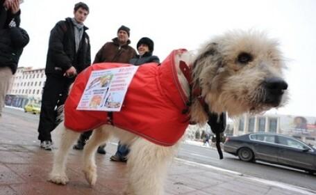 Protest fata de eutanasierea maidanezilor