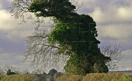 FOTO. Poza despre care vorbeste tot Internetul. Uita-te cu atentie. Cu ce seamana acest copac?