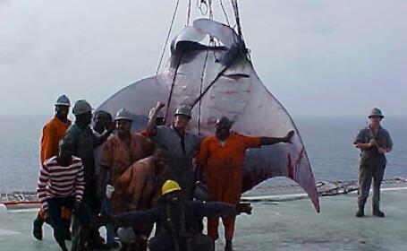 Au prins din greseala un monstru marin si s-au mandrit cu o imagine care a facut inconjurul lumii