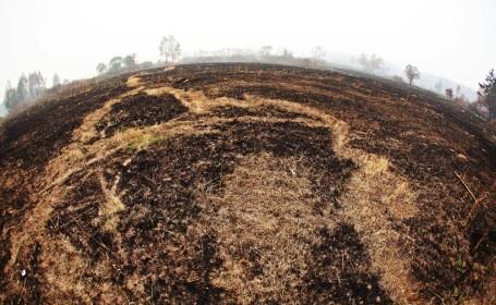 Agricultura, culturi, teren distrus