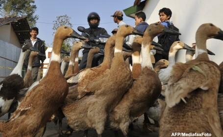 Peste trei milioane de pasari au fost sacrificate in Mexic din cauza gripei aviare