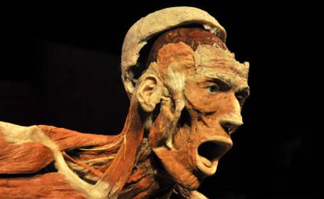 THE HUMAN BODY - 1