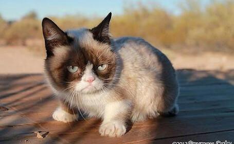 Care este numele adevarat al celei mai faimoase pisici din lume, Grumpy Cat