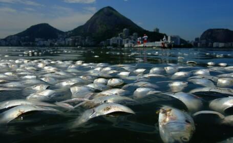 Locul unde va avea loc Olimpiada de peste 3 ani: tone de pesti morti la poalele lui Iisus in Rio