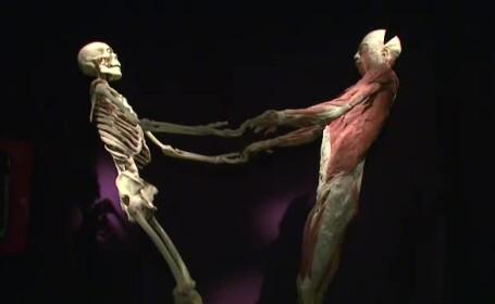 expozitie de cadavre, muzeul Antipa