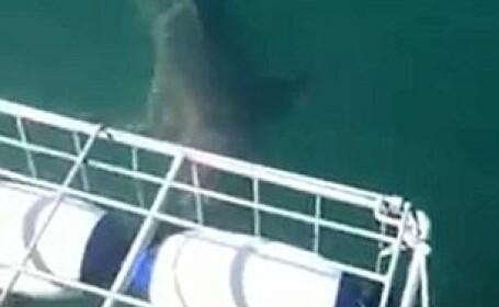 rechin ataca un scafandru