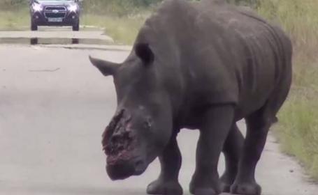 rinocer