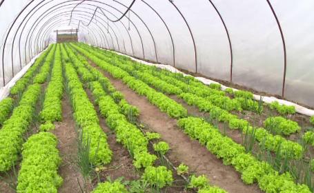 Vesti bune pentru agricultori. Fermierii vor fi ajutati de UE pentru a obtine fructe si legume pe \
