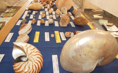 expozitie moluste