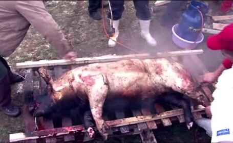 Un barbat de 41 de ani a murit, dupa ce o butelie i-a explodat in fata, in timp ce parlea un porc. Ce greseala a comis