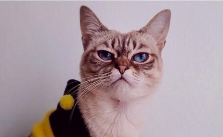 Sauer-kraut, pisicuta cu mutra \