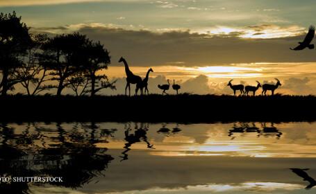 animale Africa