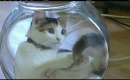 pisica regasita
