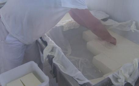 Trei angajati ai fabricii de lactate Bradet, depistati cu E.coli care duce la SHU. Rezultatele, ASCUNSE timp de 4 zile