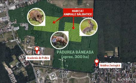 Padurea Baneasa ar putea deveni parc national. Planul ambitios al primariei de a transforma nordul Capitalei