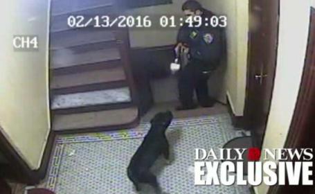 Momentul in care un politist impusca mortal cainele unei familii. Ce l-a facut pe agent sa traga. VIDEO