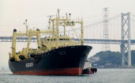 Japonia a vanat 333 de balene in Antarctica, sub pretextul \
