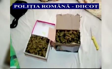 cannabis cluj