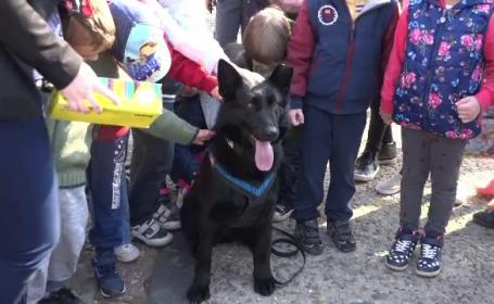 Max, cainele ofiter, a fost vedeta manifestarilor de Ziua Politiei, la Baia Mare. Copii: \