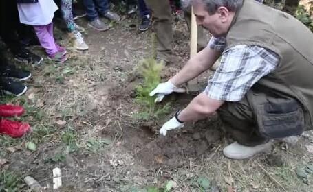 Padurarii din toata Romania vor sa stabileasca un record mondial si au incercat sa planteze 1.200.000 de puieti intr-o zi