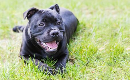 Barbat ucis de cainele lui, in Anglia. Ce televiziune importanta era la fata locului
