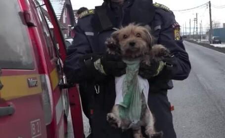 catel salvat de pompieri