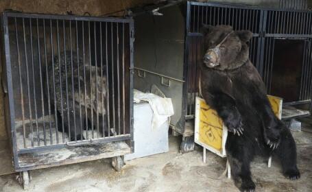 Un circ cu probleme financiare a abandonat 4 urşi într-o parcare