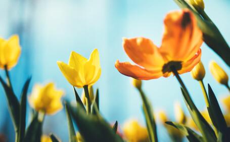 Mesaje de florii si Felicitari