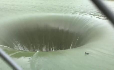 Cormoran care cade în baraj