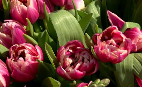 Felicitări de 8 Martie. Cele mai frumoase urări și mesaje de 8 Martie
