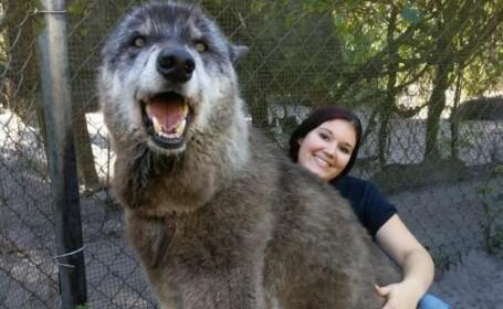Câinele Yuki