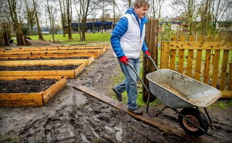 Willem-Alexander al Țărilor de Jos