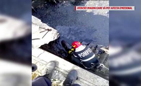 Câini salvați de pompieri dintr-un bazin cu smoală