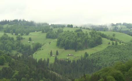 PSD vrea să ofere cadou peste 600.000 de hectare de pădure Bisericii. Cine se opune