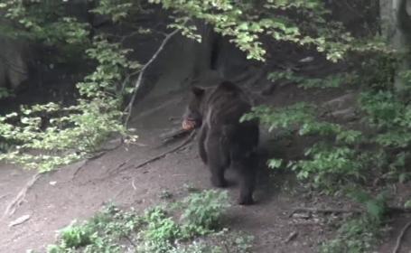 Barbat decedat, dupa ce l-a atacat un urs