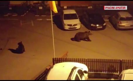 ursi in Busteni