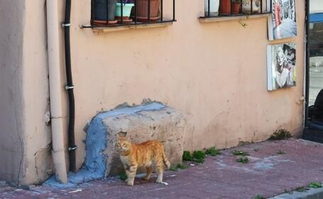 """Motivul pentru care o pisică atacă doar bărbați și câini. """"Posibil să fi suferit o traumă"""""""