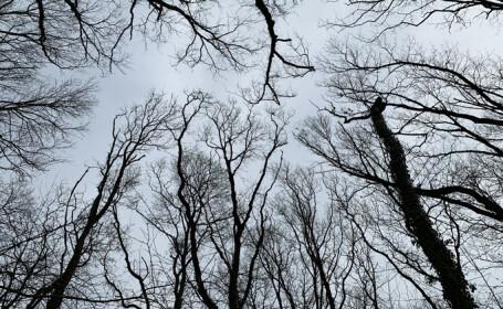 copaci fara frunze