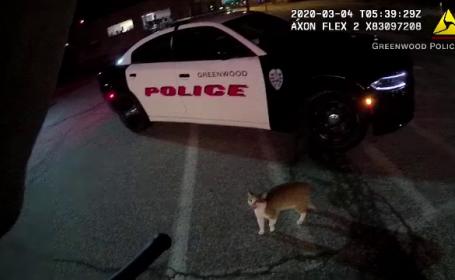 """Apelul disperat al unui polițist atacat pe stradă de o pisică. """"Vă rog, luaţi-o acasă"""""""