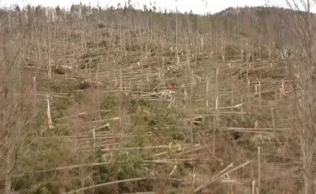 copaci distrusi