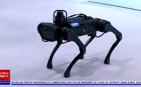 Nero, primul câine robot din România. Ce poate să facă și cât costă