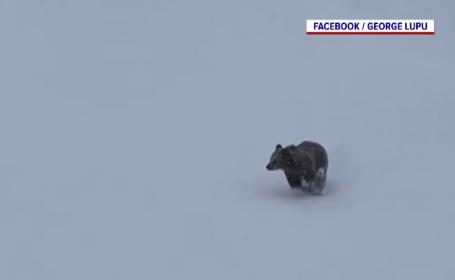 """Ursul s-a întors pe pârtia din Predeal. Cum vor să creeze autoritățile """"zone de frică"""""""