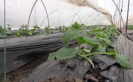 Ajutor de la stat de 2.000 de euro pentru cei care cultivă legume în sere și solarii. Anunțul ministrului Agriculturii
