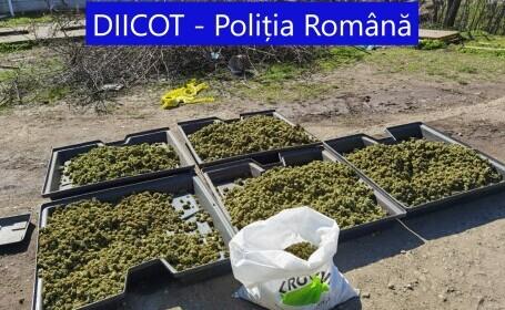Cantitate uriașă de droguri descoperită în Dolj. Doi spanioli au fost arestați