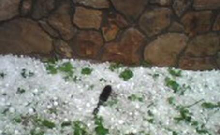Culturi agricole compromise din cauza unei furtuni cu grindina
