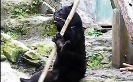 Ursul karatist