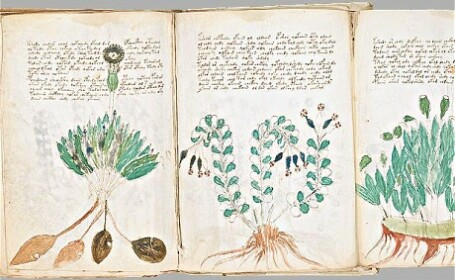 Cartea extraterestrilor. Manuscris din 1400 pe care nu-l poate citi nimeni
