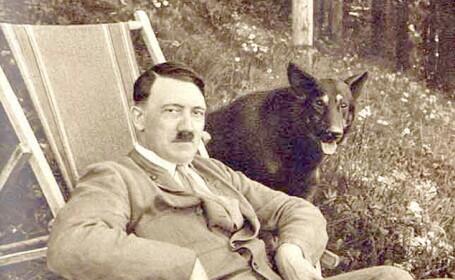 Armata secreta a lui Hitler, formata din caini vorbitori. Ce spun cercetatorii